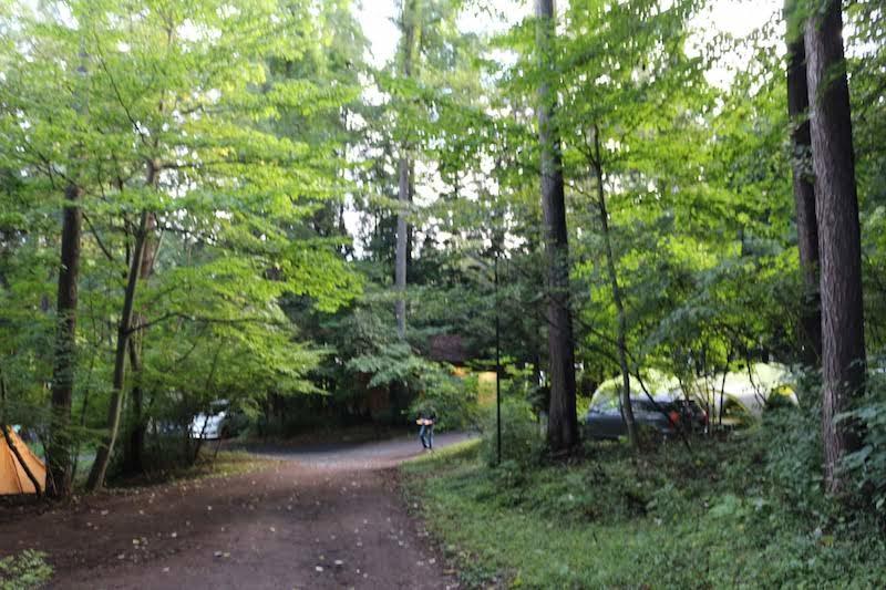 森が多いキャンプ場